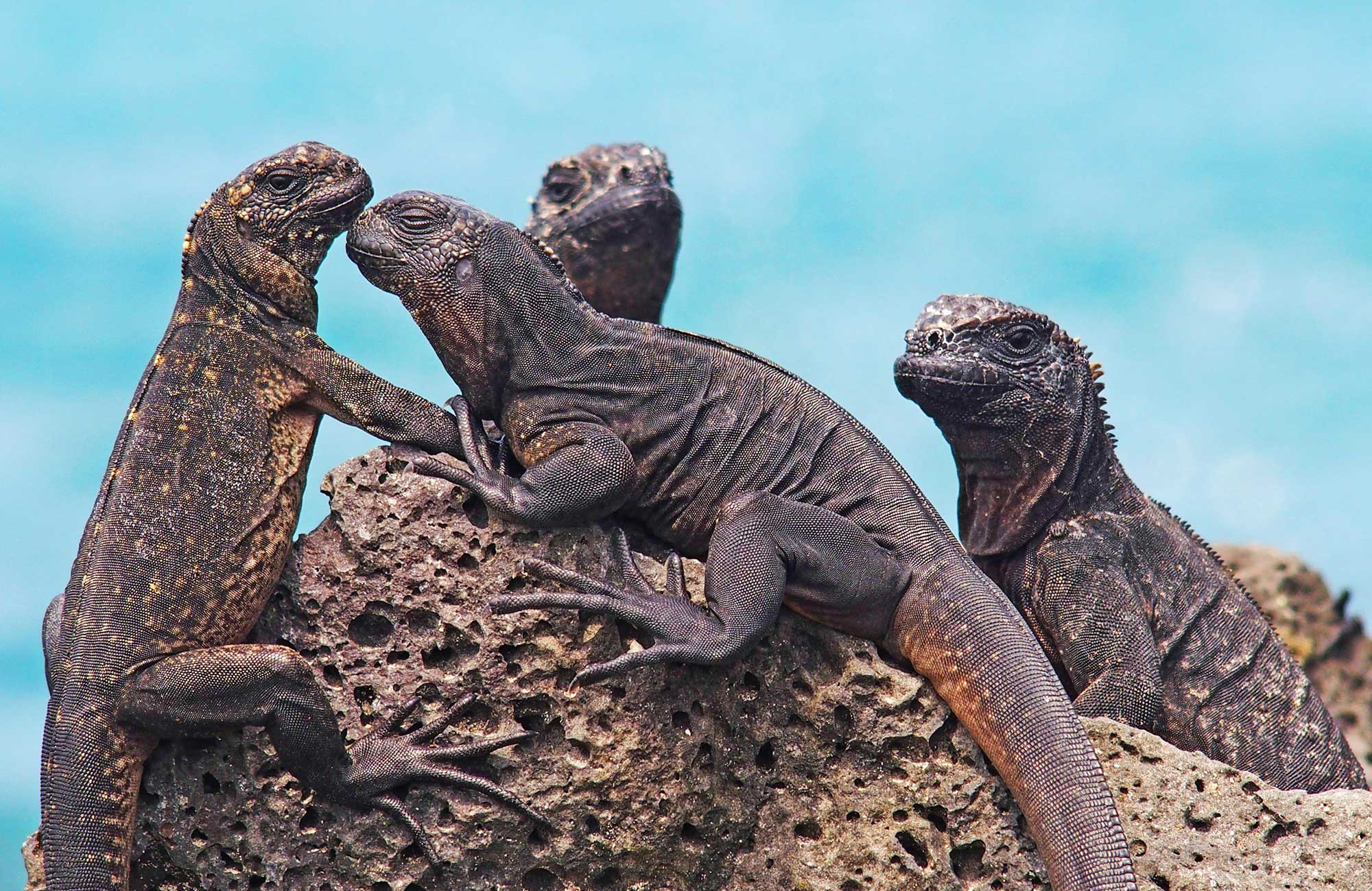Travel like Darwin and spot wildlife on the Galapagos | KILROY