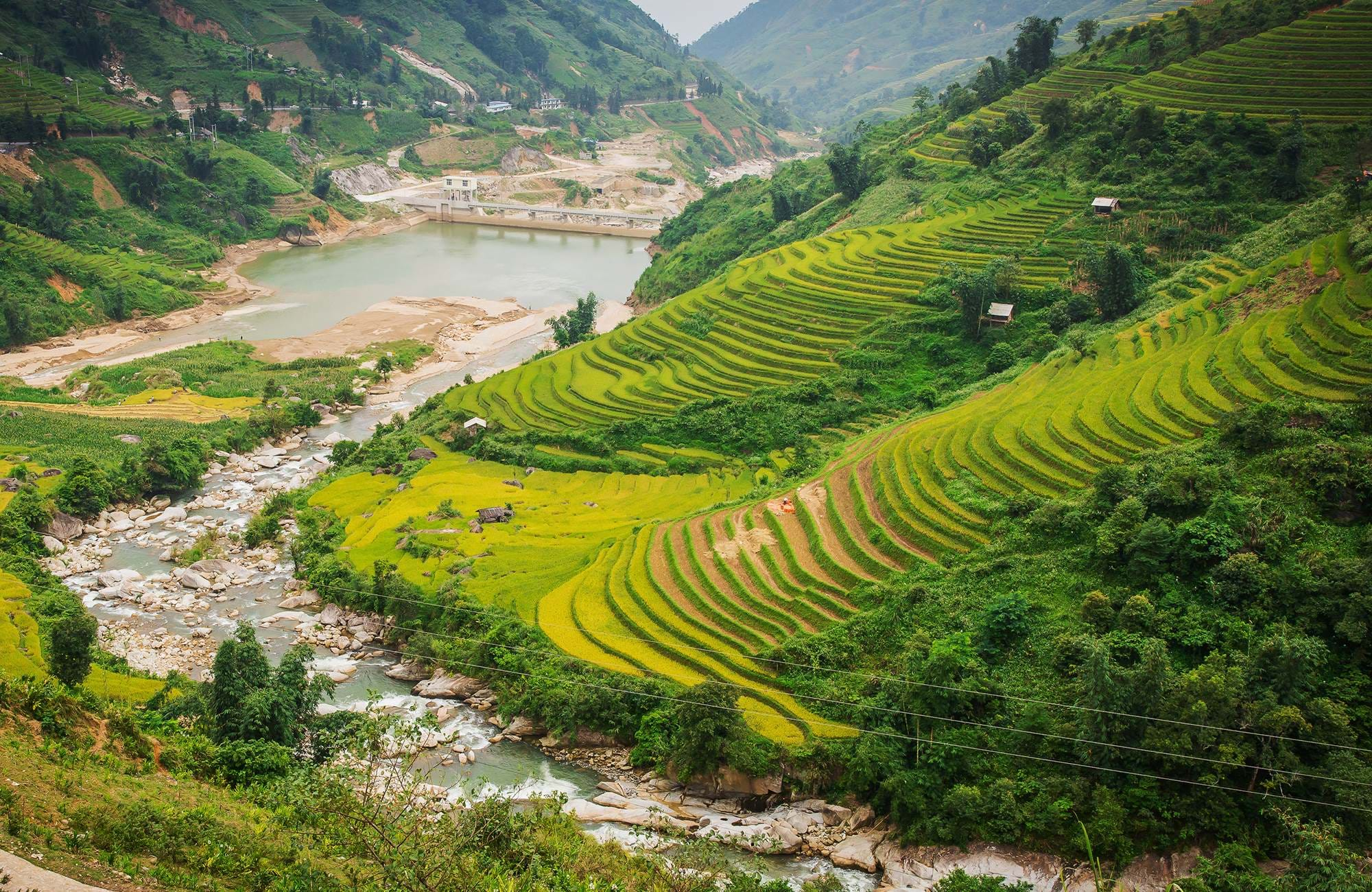 vietnam-sapa-rice-terrace-harvest-season-cover