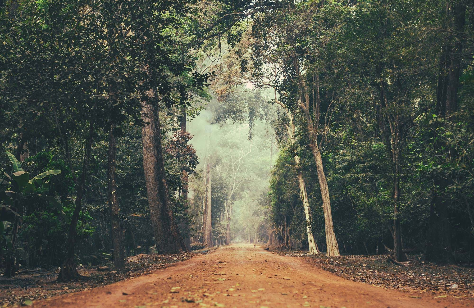 cambodia-jungle-road-cover
